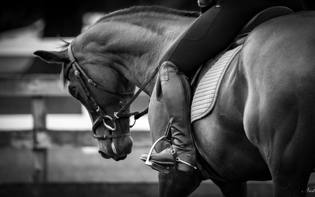 NIHB Young Performance Horse Championships Start List- Class 1: 4 Year Old Performance