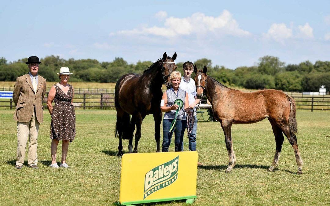 NIHB Foal Championship Results- Sunday 25th July 2021