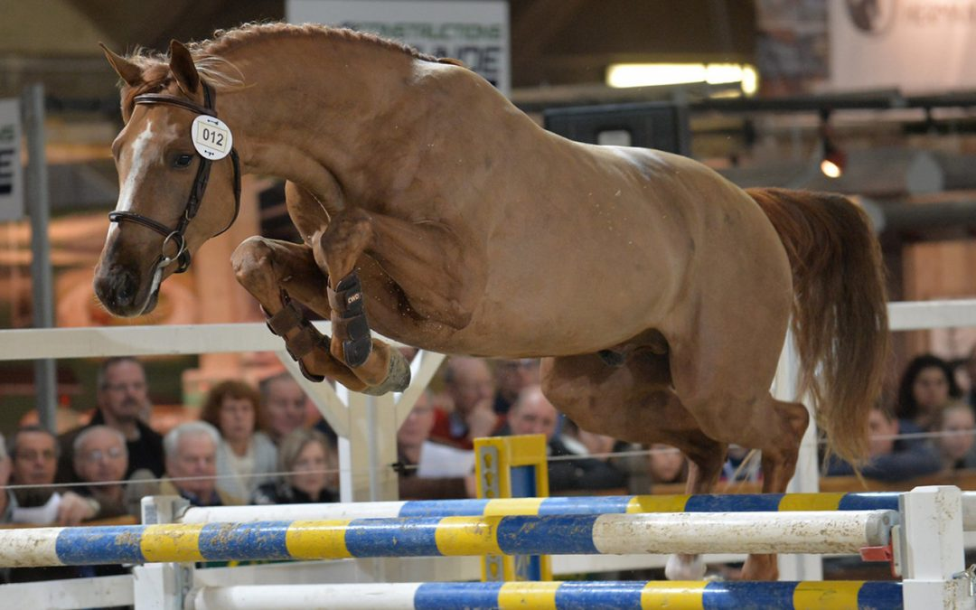 NIHB Loose Jumping Results- 13th October – Connellhill